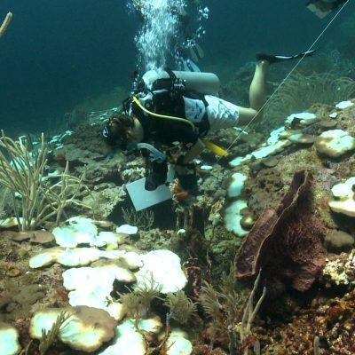 coral-bleaching-speyside-november-2010-b