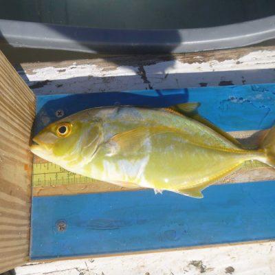 fish-clif-1
